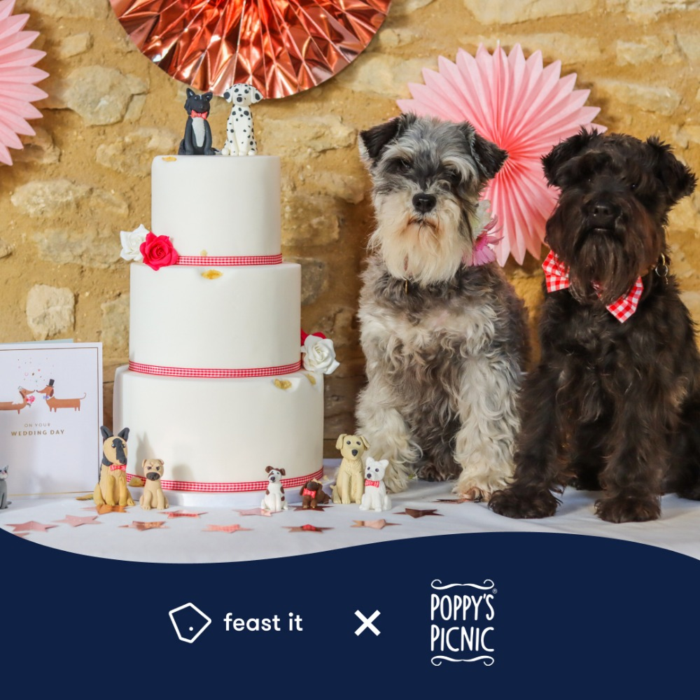 Huge rise in dog weddings leads Feast It and Poppy's Picnic to launch dog wedding planning service